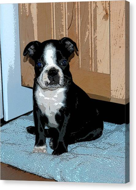 Boston Terrier Art02 Canvas Print