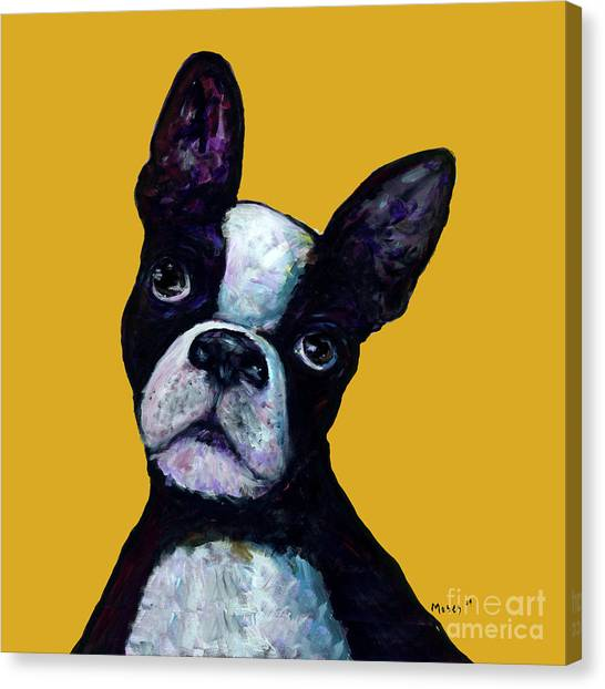 Boston Terrier On Yellow Canvas Print