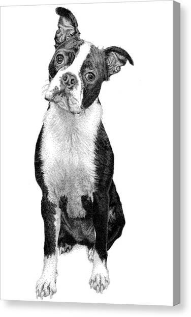Boston Terrier Canvas Print by Rob Christensen