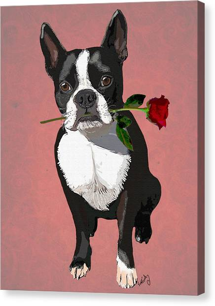 Boston Terrier With A Rose In Mouth Canvas Print by Kelly McLaughlan