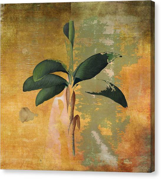 Botanical Banana Tree Canvas Print