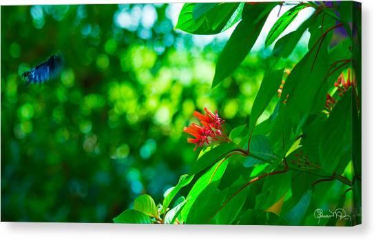 Botanical Garden Butterfly Canvas Print