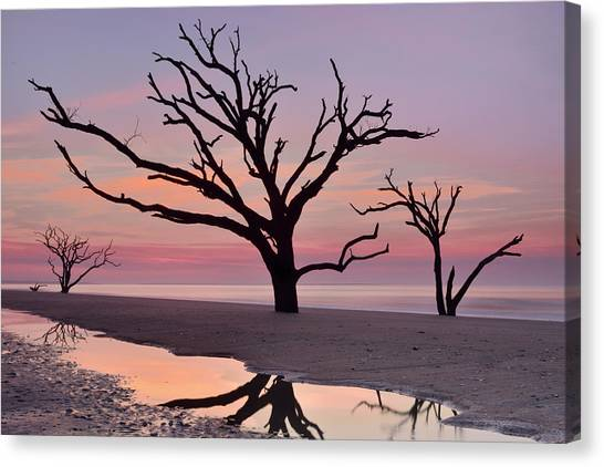 Botany Bay Trees Canvas Print