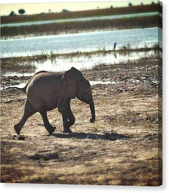 Beagles Canvas Print - #botswana#elephant#love by Caitlin Beagle