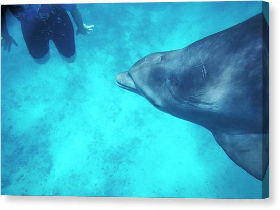 Bottlenose Dolphins Canvas Print - Bottlenose Dolphin by Chris Martin-bahr/science Photo Library