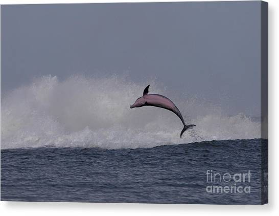 Bottlenose Dolphin Photo Canvas Print