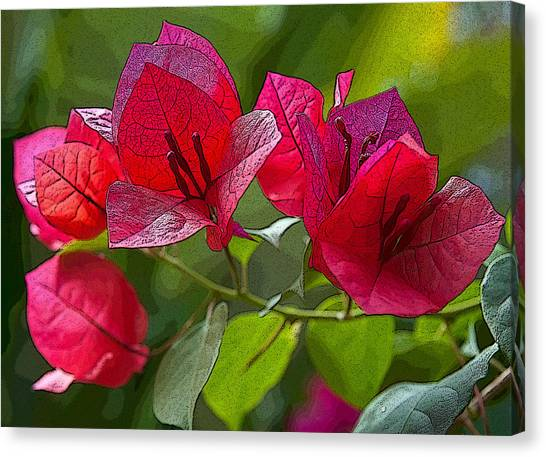 Bougainvillea At Casa Candiles Ixtapa Mexico Canvas Print
