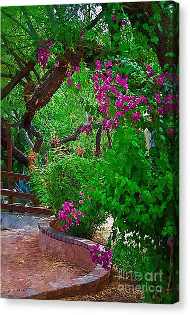 Bougainvillea In The Courtyard Canvas Print