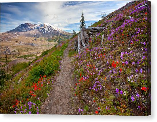 Mount St. Helens Canvas Print - Boundry Trail by Darren  White