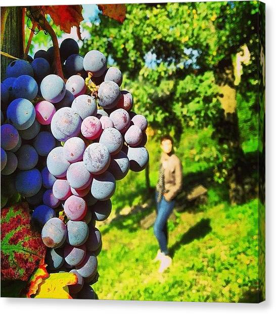 Grapes Canvas Print - Bountiful by Jonathan P