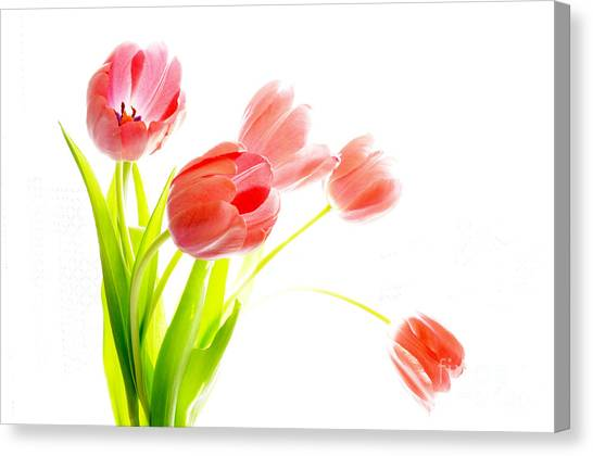 Tulips Flower Bouque In Digital Watercolor Canvas Print