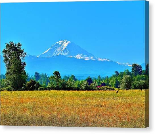 Bovine View Of Mt. Rainier Canvas Print