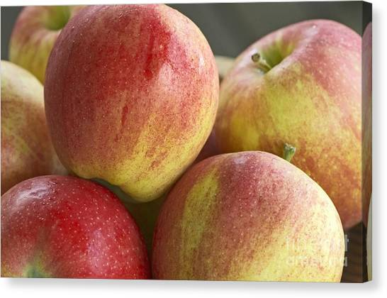 Bowl Of Royal Gala Apples Canvas Print by Sharon Talson