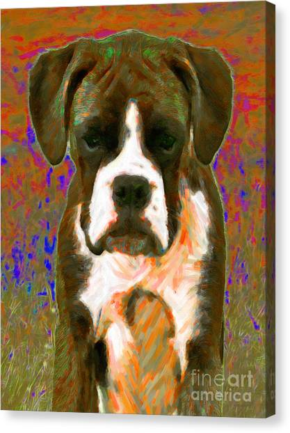 Boxer 20130126v1 Canvas Print by Wingsdomain Art and Photography