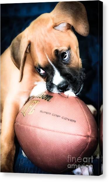 Boxer Puppy Cuteness Canvas Print