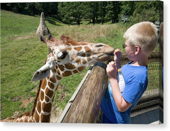 Binders Canvas Print - Boy Feeding Giraffe by Jim West