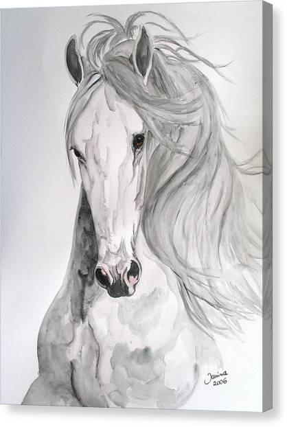 Boyardo Canvas Print by Janina  Suuronen