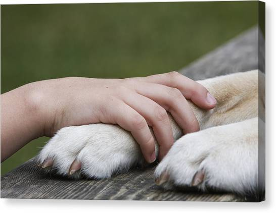 Boy's Hand Resting On His Dog's Paw Canvas Print by Compassionate Eye Foundation/Jetta Productions