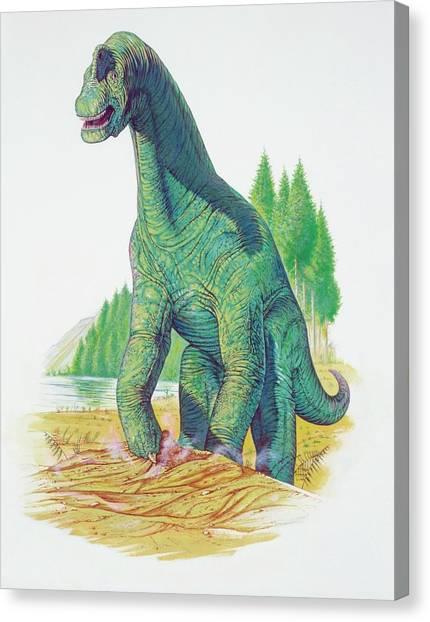 Brachiosaurus Canvas Print - Brachiosaurus by Deagostini/uig/science Photo Library