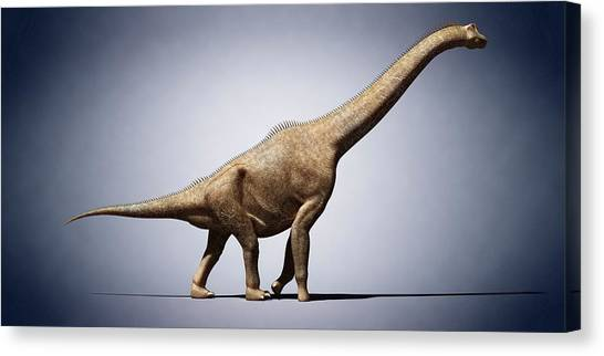 Brachiosaurus Canvas Print - Brachiosaurus by Sciepro
