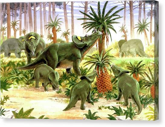 Argentinian Canvas Print - Brachyceratops Dinosaurs by Deagostini/uig