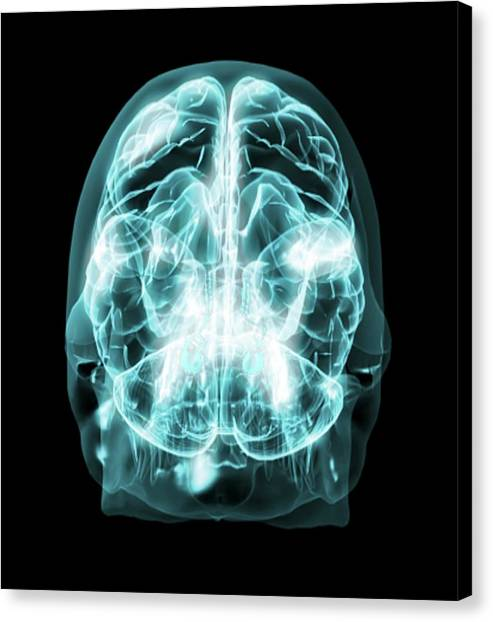 Brain Anatomy Canvas Print by Thierry Berrod, Mona Lisa Production/ Science Photo Library
