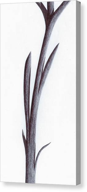 Branch Of A Fragment Of Life Canvas Print