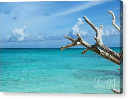 Branch Over The Caribbean Canvas Print