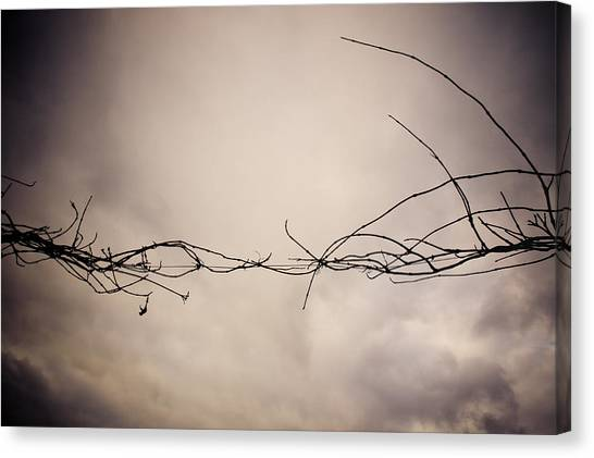 Branches Against A Winter Sky Canvas Print by Vivienne Gucwa