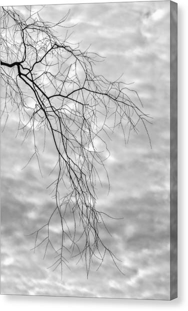 Branches And Clouds Canvas Print by Robert Ullmann
