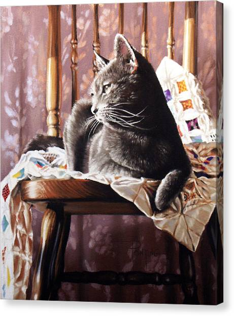 Brat Cat Canvas Print by Dianna Ponting