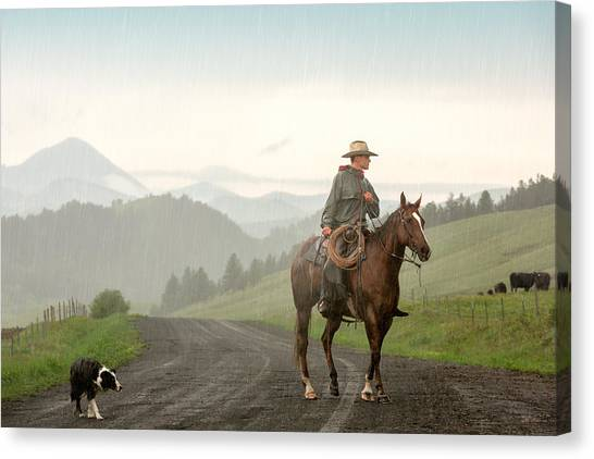 Cow Farms Canvas Print - Braving The Rain by Todd Klassy