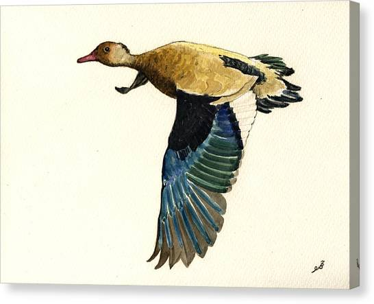 South American Canvas Print - Brazilian Teal Or Brazilian Duck Amazonetta Brasiliensis by Juan  Bosco