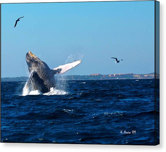 Breaching Whale Canvas Print