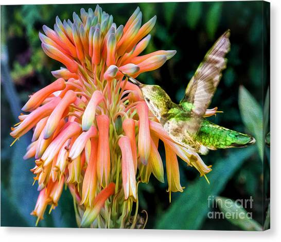 Breakfast For A Hummer Canvas Print