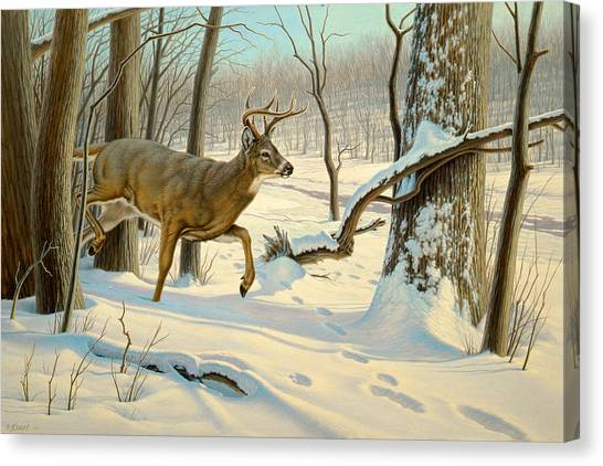 White-tailed Deer Canvas Print - Breaking Cover-whitetail by Paul Krapf