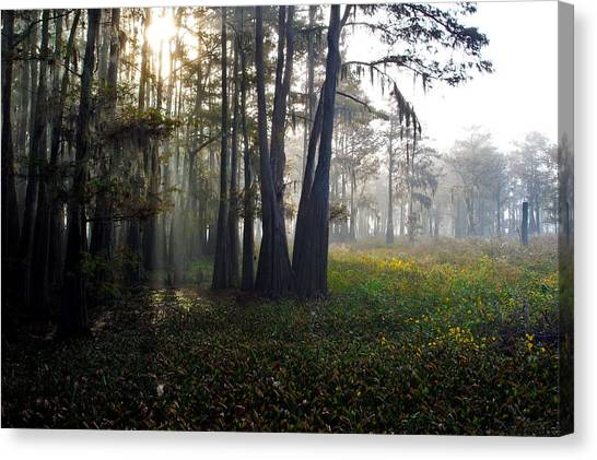 Breaking Through Morning Fog Canvas Print