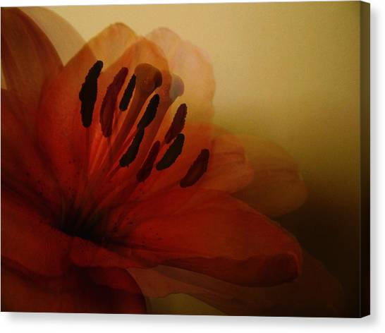 Breath Of The Lily Canvas Print