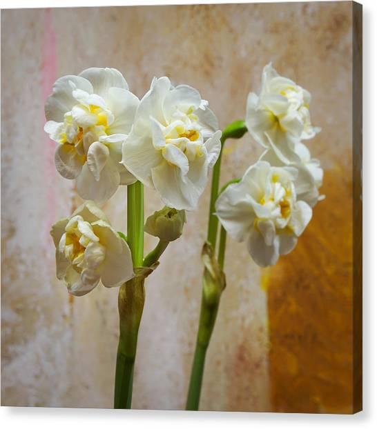 Bridal Canvas Print - Bridal Crown Narcissus Double by Lutz Baar