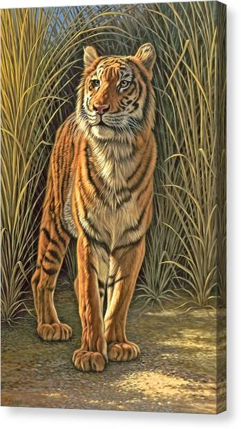 Tiger Canvas Print - Brief Appearance by Paul Krapf