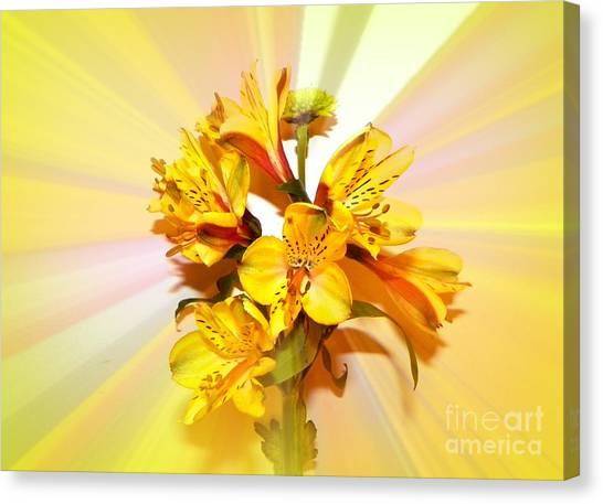 Bright As The Sun Canvas Print by Carol Grenier
