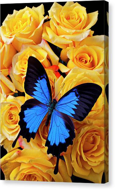 Bright Blue Butterfly On Yellow Roses Canvas Print