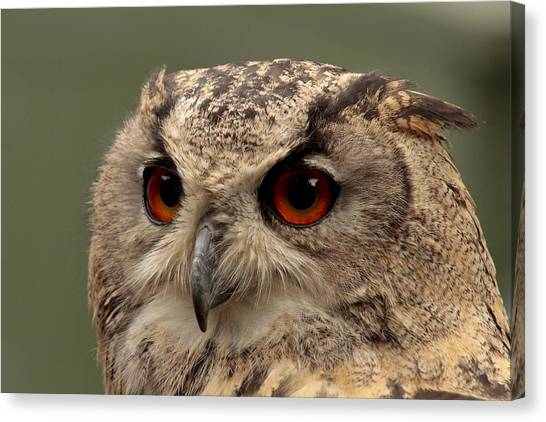 Bright Eyed Eagle Owl  Canvas Print by Simon Gregory
