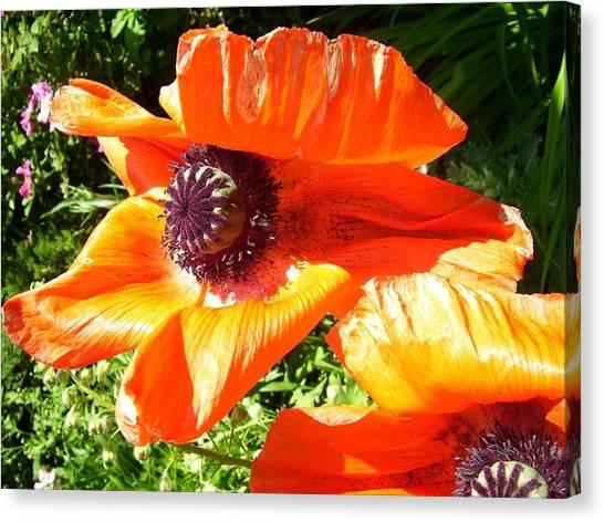 Bright Orange Poppy Canvas Print