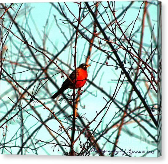 Bright Red Robin Canvas Print