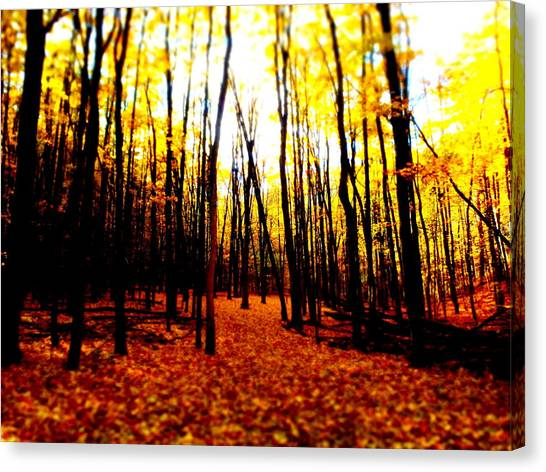 Bright Woods Canvas Print
