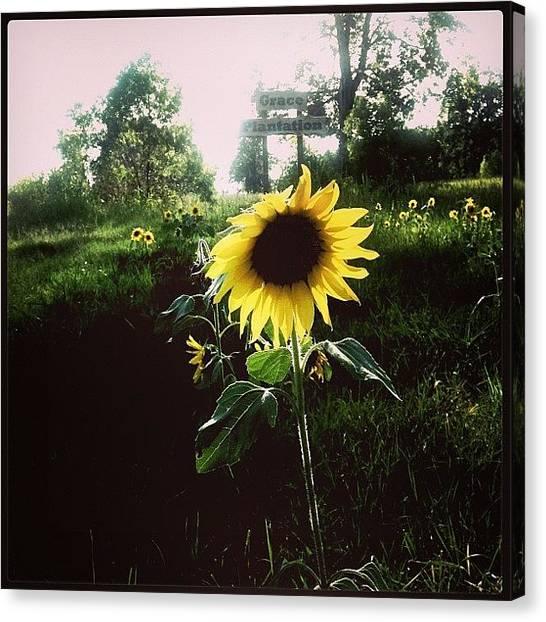 Mississippi Canvas Print - Brighten Your Day  by Scott Pellegrin