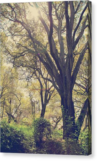 Oak Trees Canvas Print - Brightening Up The Day by Laurie Search