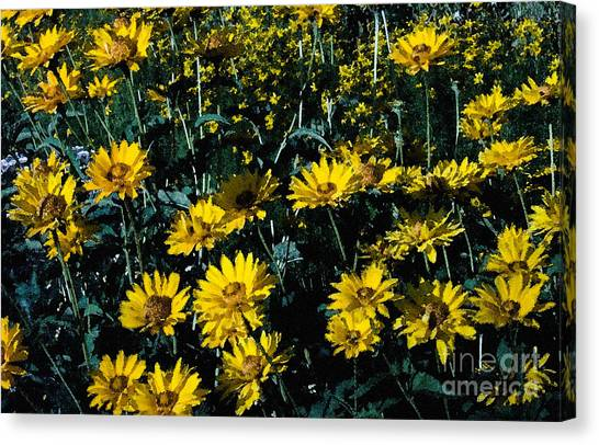 Brillant Flowers Full Of Sunshine. Canvas Print by James Rabiolo