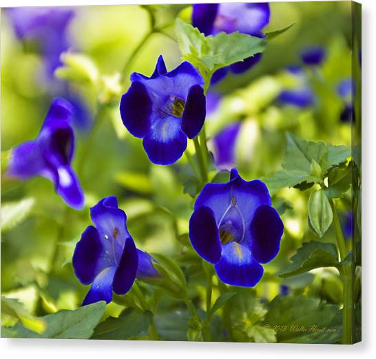 Brilliant Blues  Canvas Print